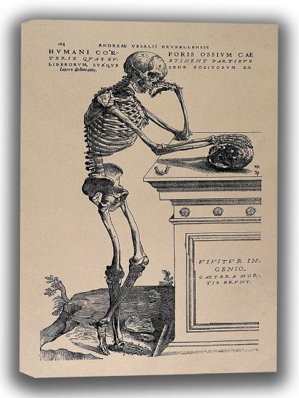 "Vesalius, Andreas: Human Anatomy Print ""Skeleton Contemplating a Skull"" (1543). Fine Art Canvas. Sizes: A4/A3/A2/A1 (0033)"